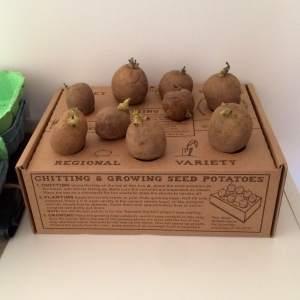 gyop-chitting-potatoes